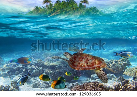 Green turtle in the tropical water - stock photo