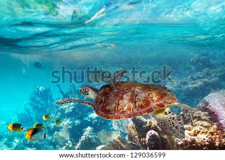 Green turtle in the tropical water of Thailand - stock photo