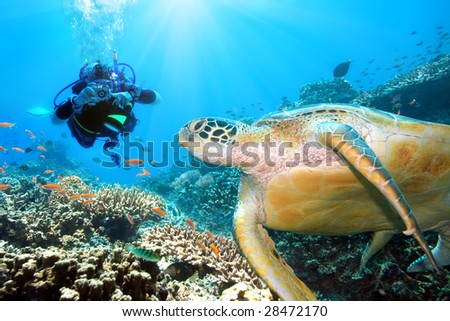 Green turtle underwater and diver. Sipadan. Celebes sea - stock photo