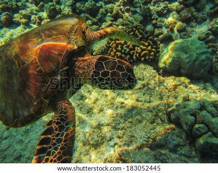 Green turtle underwater with sunlight
