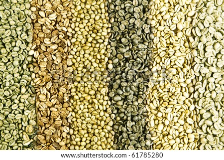 green unroasted coffee beans - stock photo