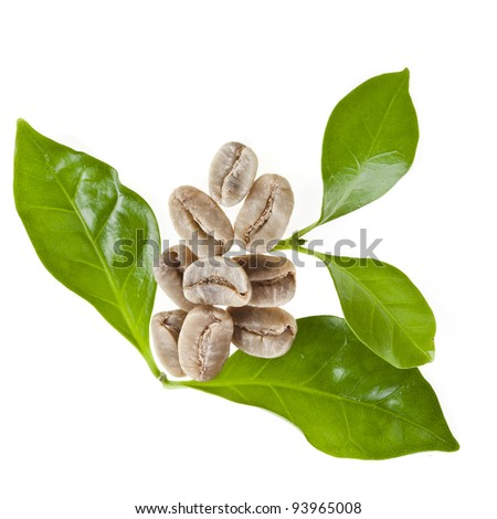 green unroasted coffee grains and leaves of coffee trees isolated on white - stock photo