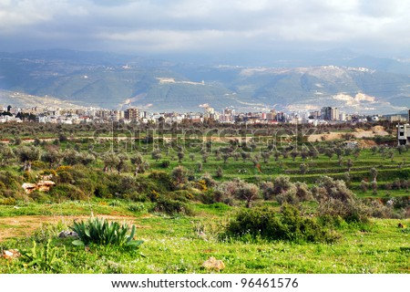Green valley, olive garden and thunderstorm clouds above the mountains, Tripoli, Lebanon - stock photo