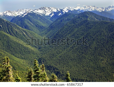 Green Valleys Evergreens, Snow Mountains Hurricane Ridge Olympic National Park Washington State Pacific Northwest  Ridge Line - stock photo
