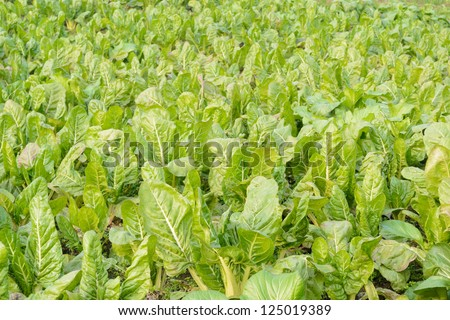 green vegetable field in farm land - stock photo