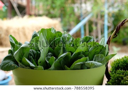 green vegetable in basket.