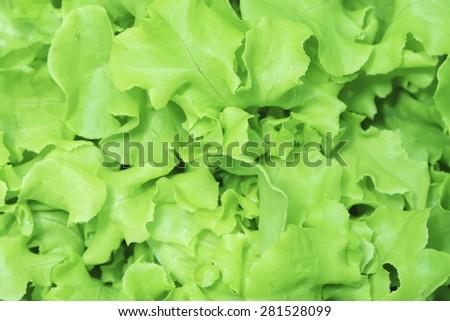 Green vegetables. - stock photo
