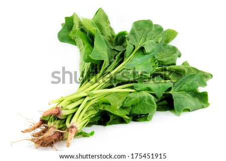 Green vegetables and dark leafy food  as a healthy eating concept of fresh garden produce organically grown as a symbol of health  - stock photo