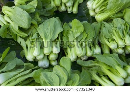Green vegetables has health benefits. - stock photo
