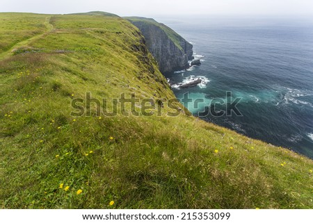 green vegetation at Cape St. Mary's, Newfoundland - stock photo