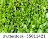 Green vegetation. Image of young shoots. Side sunlight for a division of shadows and highlights - stock photo