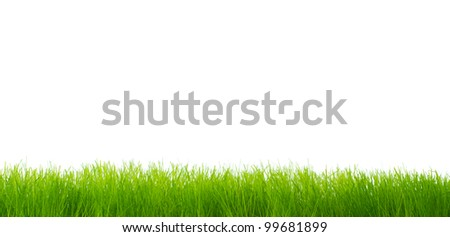 Green vibrant grass over white background - stock photo