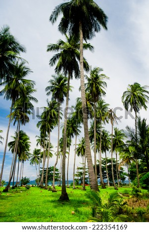 Green View Coconut Getaway  - stock photo