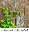 green Vine backgrounds - stock photo