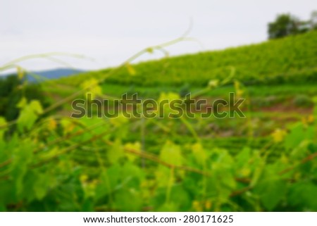 Green vineyard defocused for background, horizontal image - stock photo