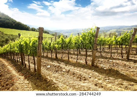 green vineyard in the Tuscan region of Chianti and field  - stock photo