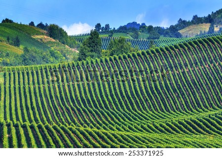green vineyard on italy closeup - stock photo