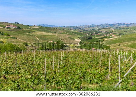 Green vineyard on the hills near Barolo in Piedmont, Northern Italy. - stock photo