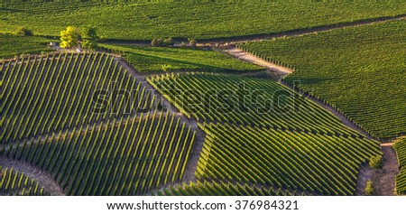 Green vineyards on hills of Langhe at sunset in Piedmont, Northern Italy (panorama).