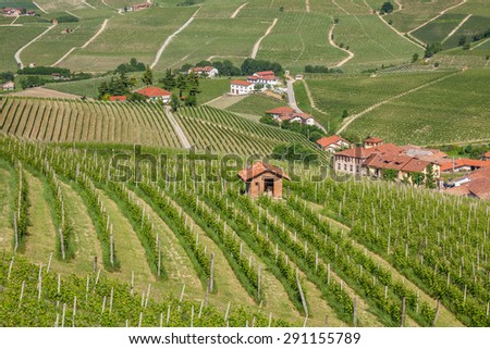 Green vineyards on the hills and rural houses on background in Piedmont, Northern Italy. - stock photo