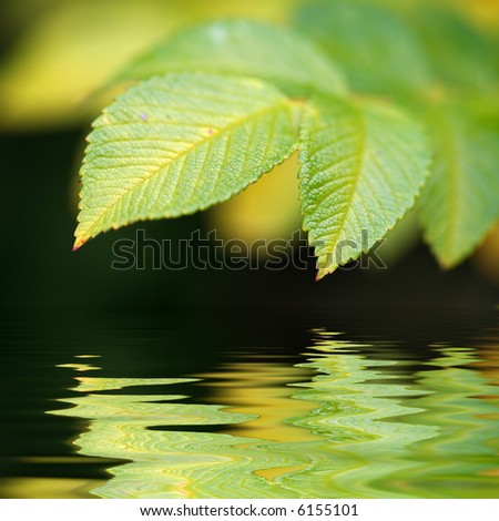 green vivid leaf with reflexion in water - stock photo