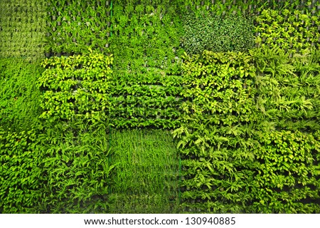 Green wall - stock photo