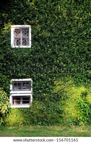 Green wall house