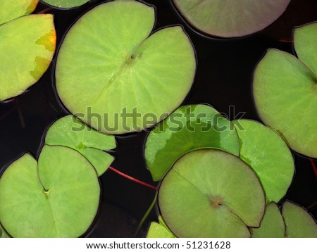 Green Water Lily Pads - stock photo
