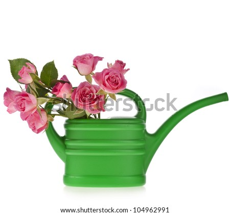 green watering can with  bouquet rose isolated on white - stock photo