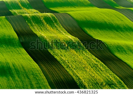 Green wavy hills in South Moravia, Czech Republic - stock photo