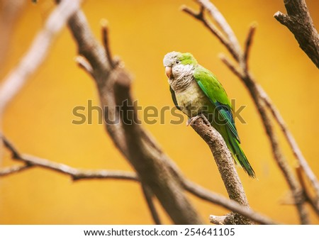 Green wavy parrot on the bright yellow background