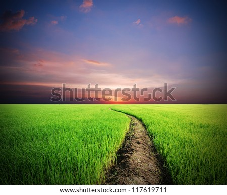 green way to the sunset background for design - stock photo
