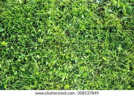 Green weed grass background in summer day - stock photo