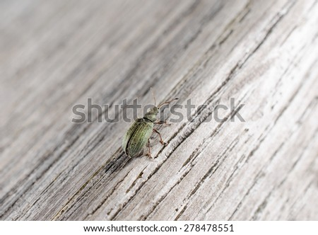 green weevil on wood (from behind) - stock photo