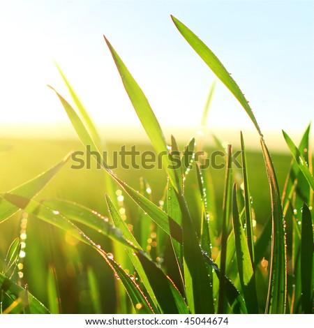 Green wet grass blue sky and sunlight - stock photo