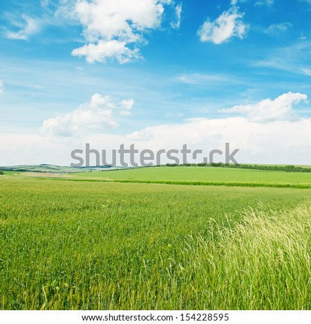 green wheat field and blue cloudy sky - stock photo