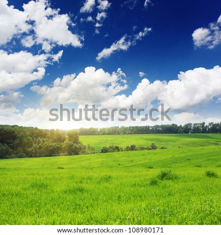 Green wheat field and blue sky with clouds