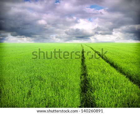 green wheat field and tractor track - stock photo