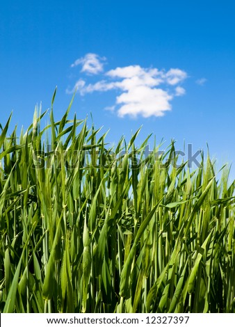 AERIAL CLOSE UP: Green Wheat Field In Spring Stock Video Footage ...