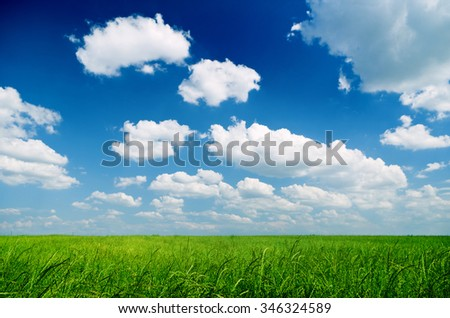 Green wheat field on a beautiful spring day - stock photo