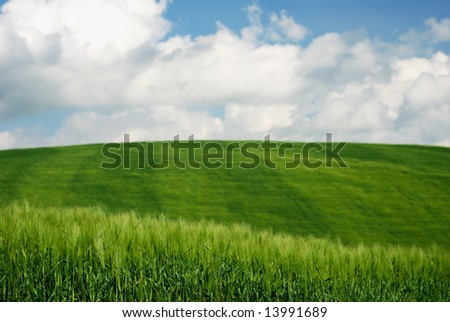 Green wheat fields with blue and white sky