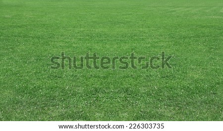 Green wheat on a grain field grass texture background - stock photo