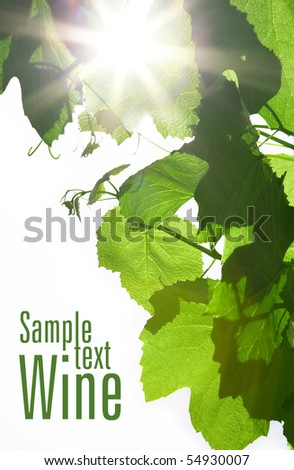 green wine leaves and sun rays - stock photo