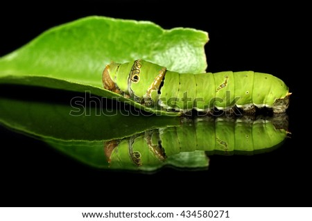 Green worm on black background