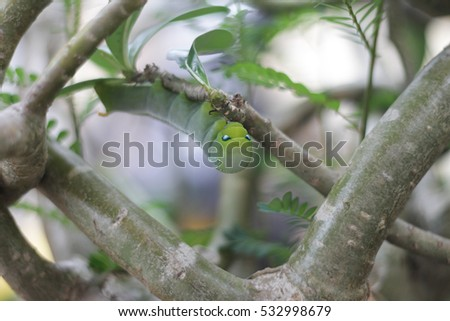 Green worms eat the leaves in nature on tree