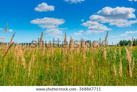 Green yellow wild grass in the afternoon - stock photo