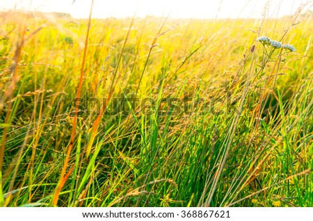 Green yellow wild grass in the spring and summer - stock photo