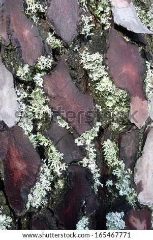 green yellow wood lichen, beautiful nature photo - stock photo
