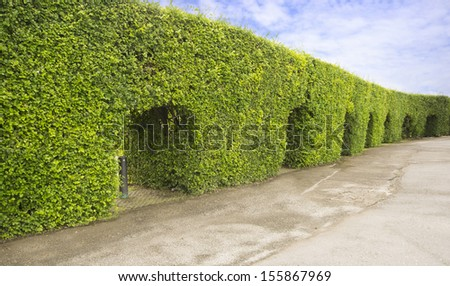 Green Yew arch, English garden - stock photo