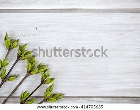 Green young lilac leaves on a wood texture - stock photo